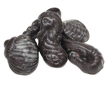 Sea shells P